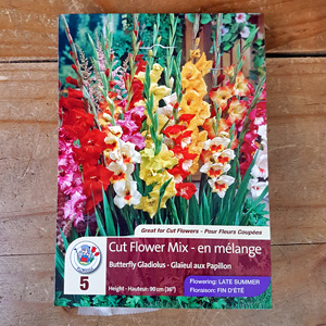 Gladiolus Butterfly Mix Bulbs