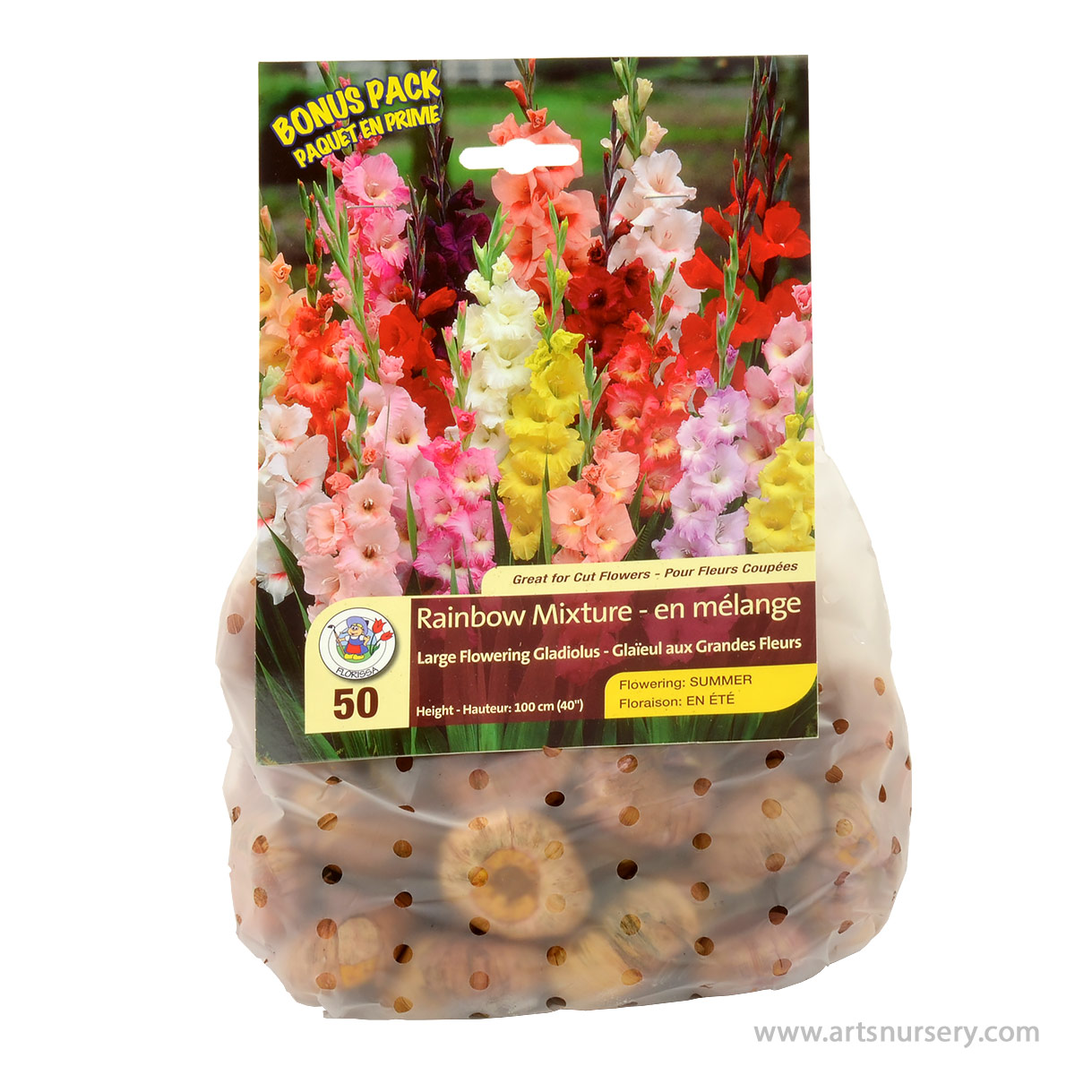 Gladiolus Rainbow Mixture Bulbs Bonus Pack