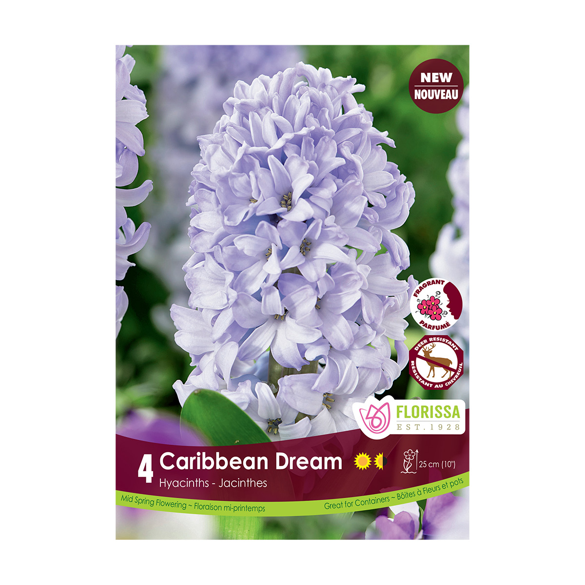 Hyacinth 'Caribbean Dream' Bulbs 4Pk