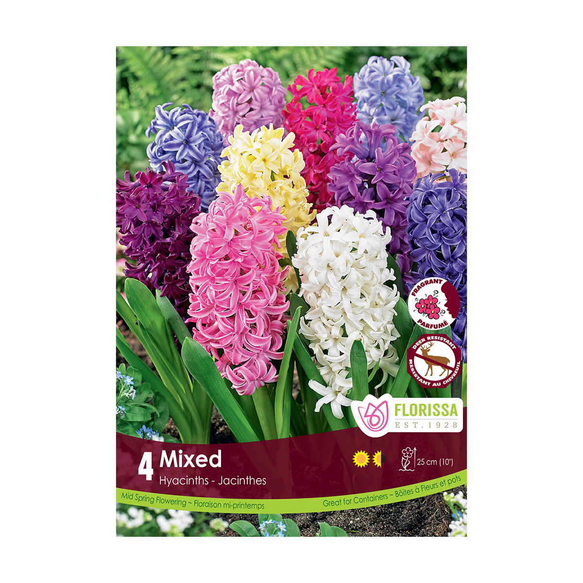 Hyacinthus 'Fragrant Mix' Bulbs 8Pk
