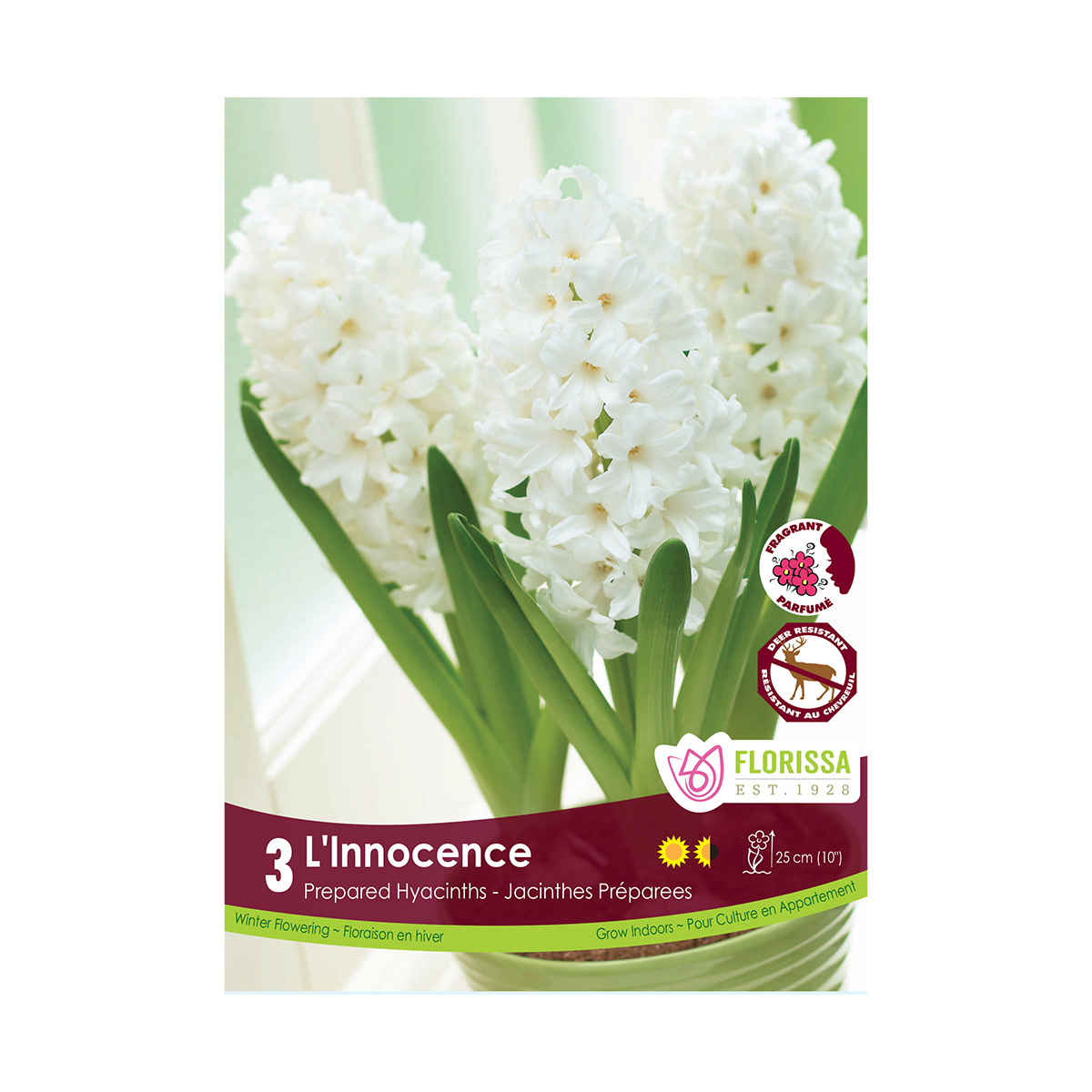 Prepared Hyacinth L Innocence Bulbs