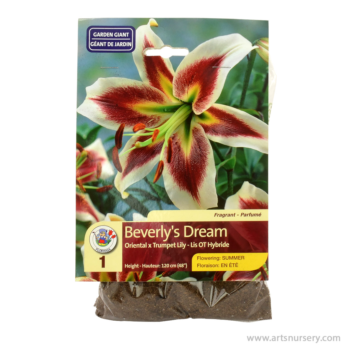 Lily Beverlys Dream Bulb