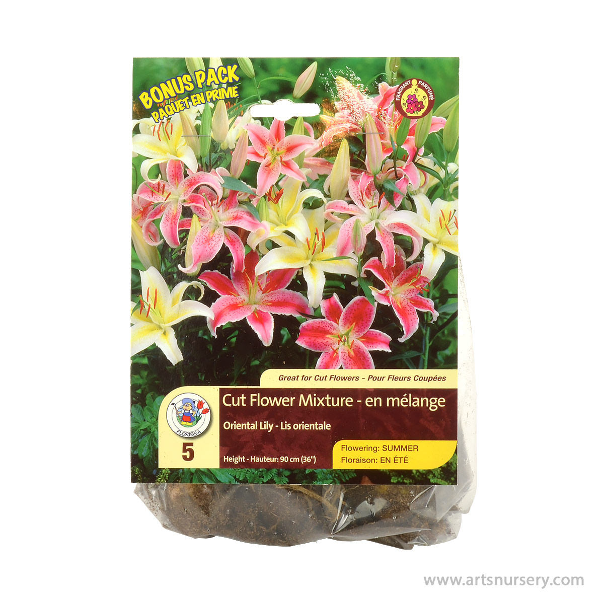 Lily Oriental Cut Flower Mixture Bonus Pack Bulbs