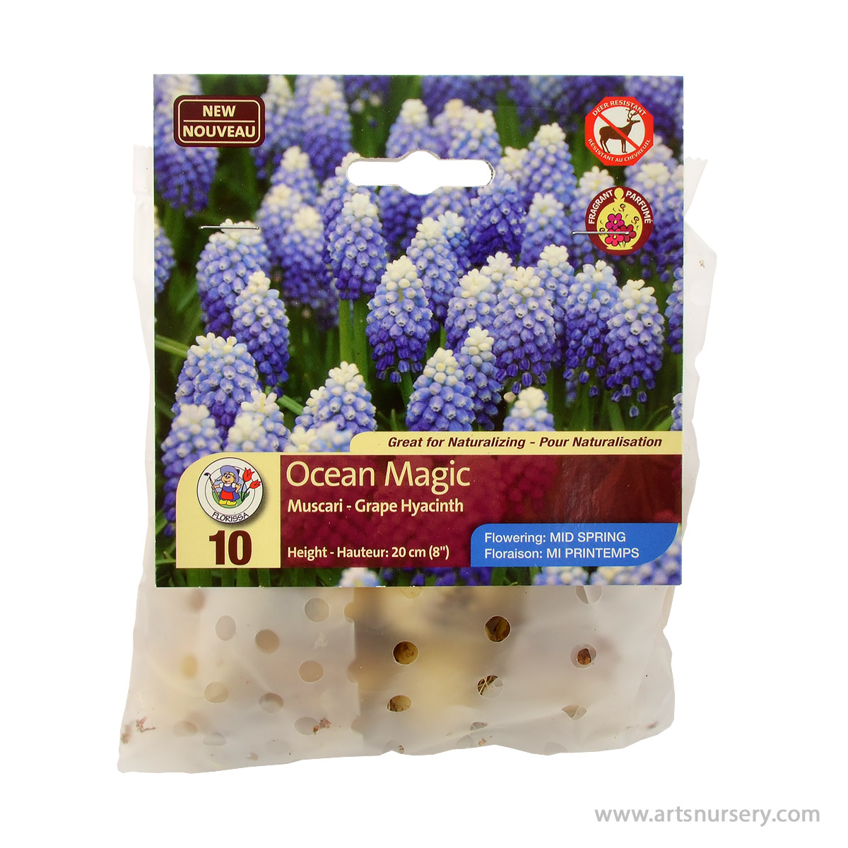 Muscari 'Ocean Magic' Bulbs