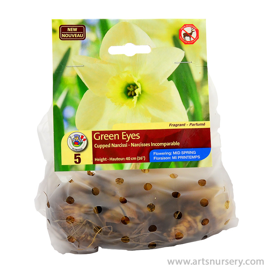 Narcissus 'Green Eyes' Bulbs