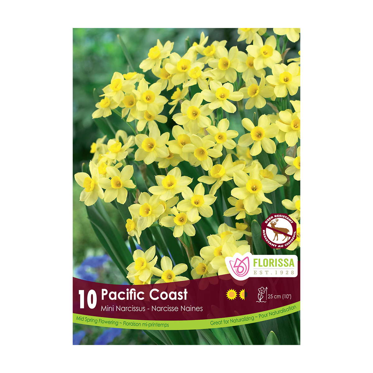 Narcissus 'Pacific Coast Mini' Bulbs