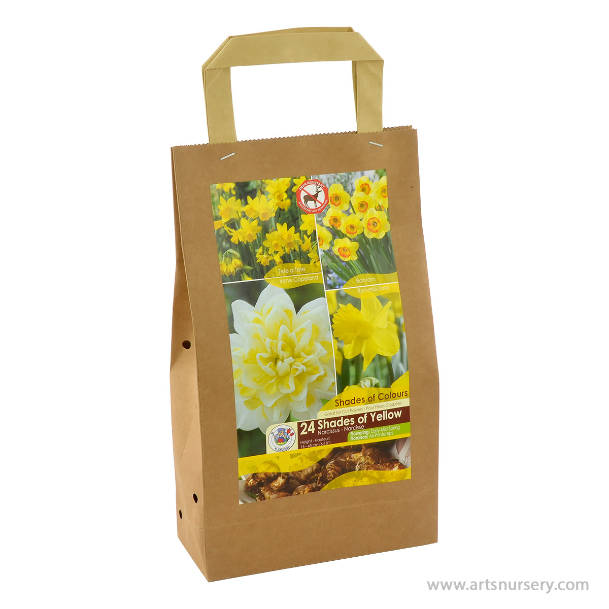 Narcissus 'Shades of Yellow' Bulb Kit