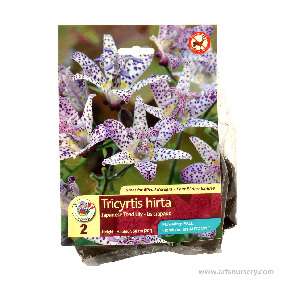 Tricyrtis empress arts nursery ltd japanese toad lily root izmirmasajfo