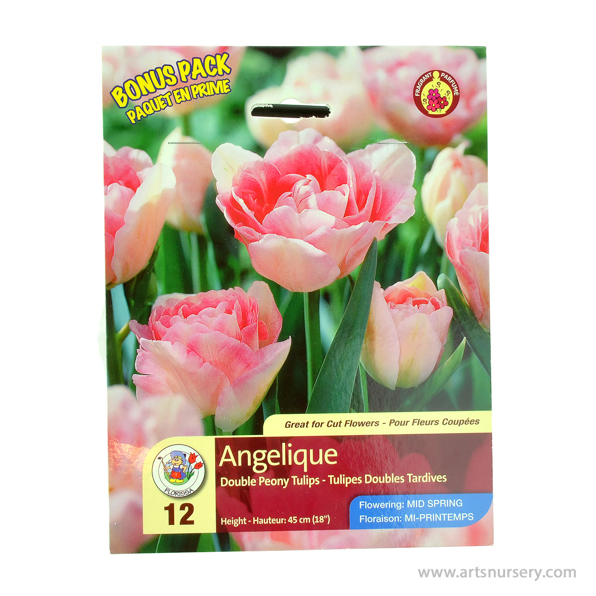 Tulipa 'Angelique' Bonus Pack Bulbs