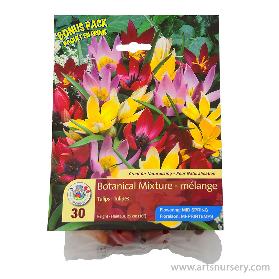 Tulipa 'Botanical Mix' Bulbs