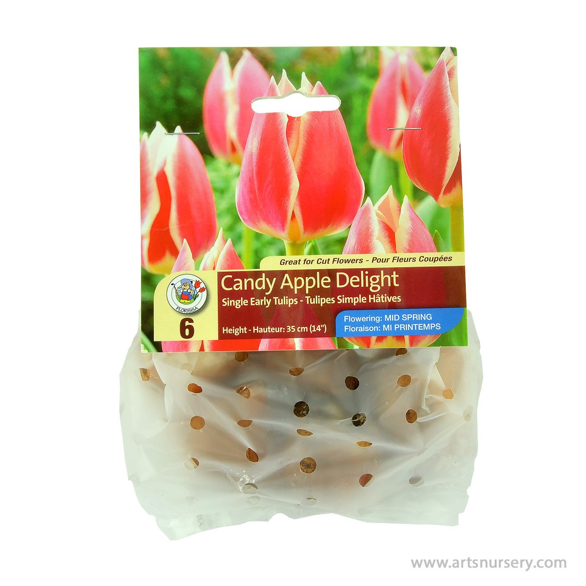 Tulipa 'Candy Apple Delight' Bulbs