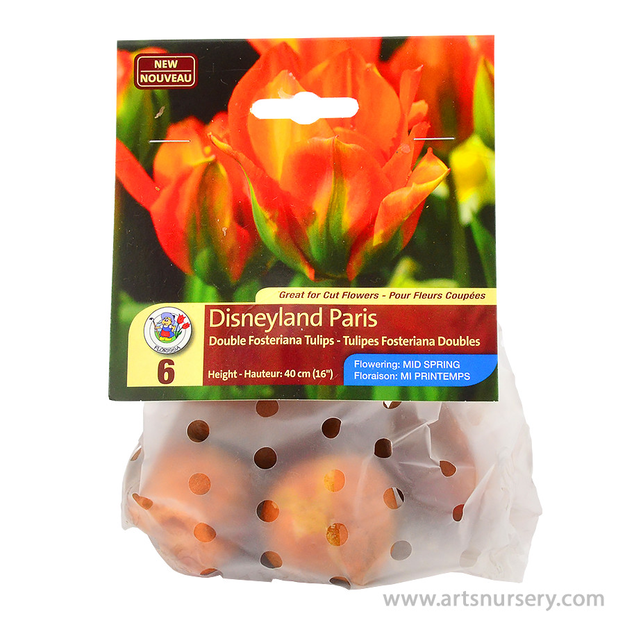 Disneyland Paris Double Fosteriana Tulip Bulbs