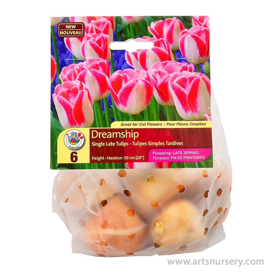 Dreamship Single Late Tulip Bulbs