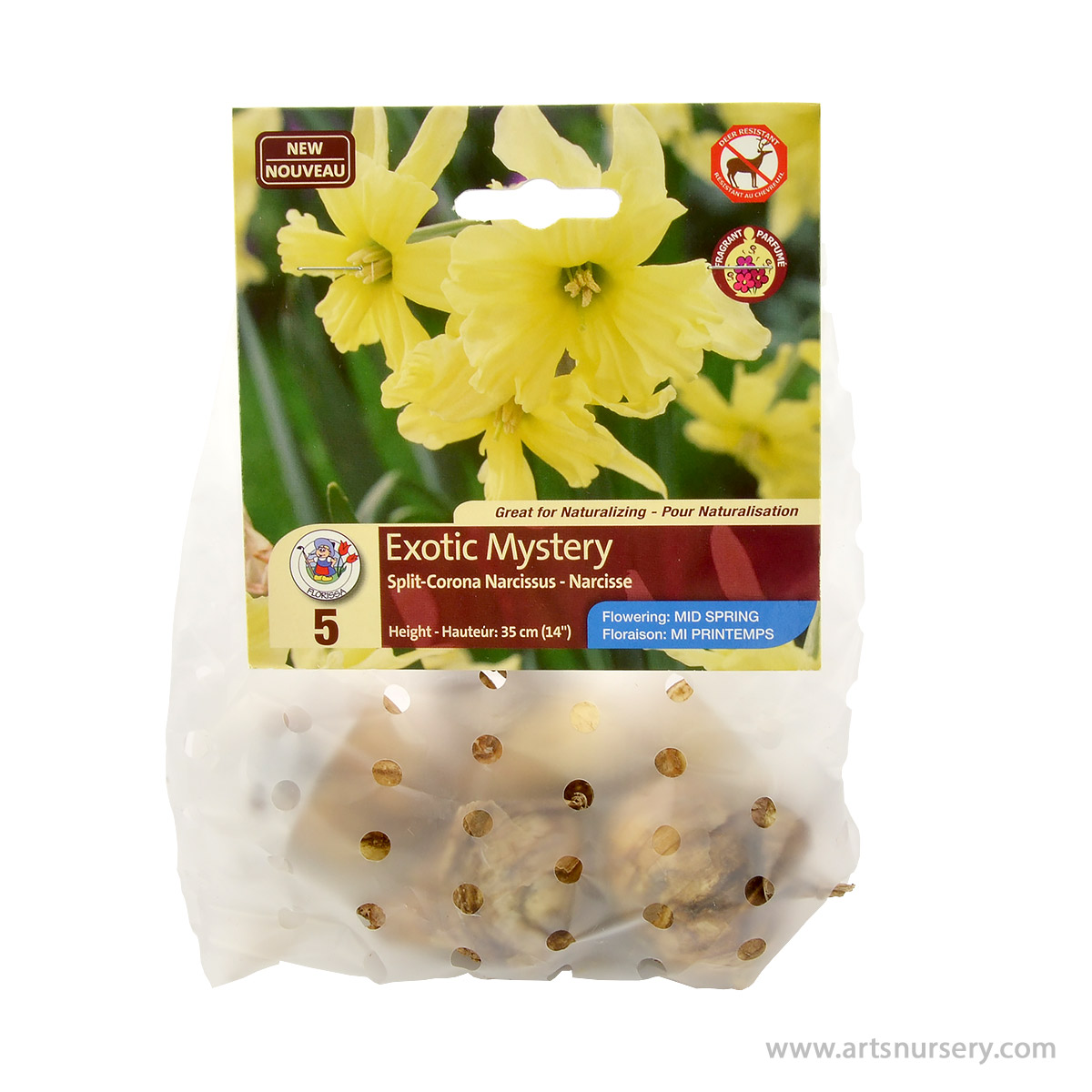 Narcissus 'Exotic Mystery' Bulbs