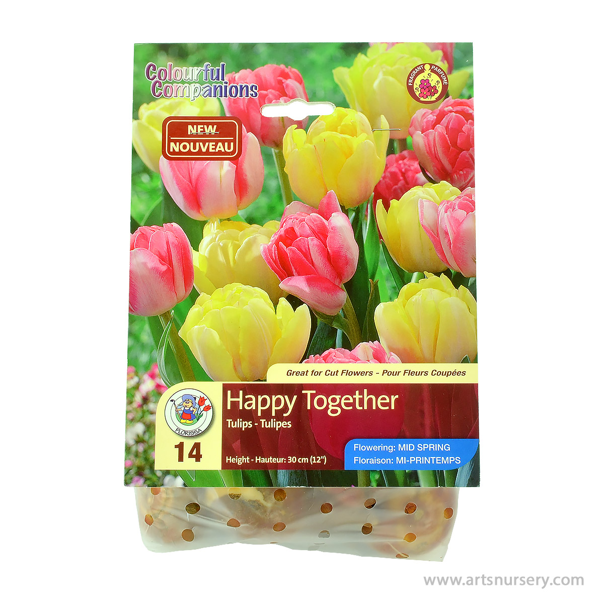 Colourful Companions Tulipa 'Happy Together' Bulbs