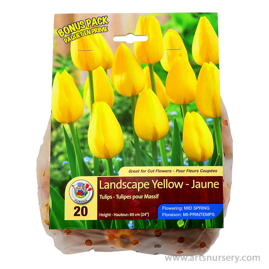 Tulipa 'Landscape Yellow' Bulbs