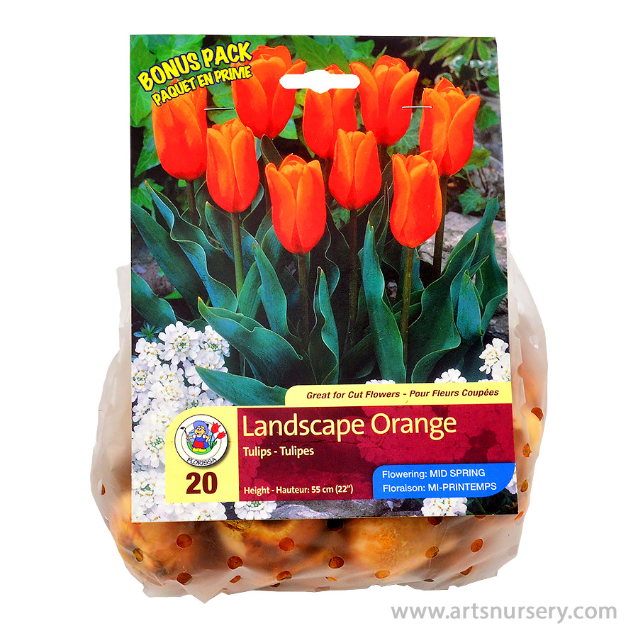 Tulipa 'Landscape Orange' Bulbs