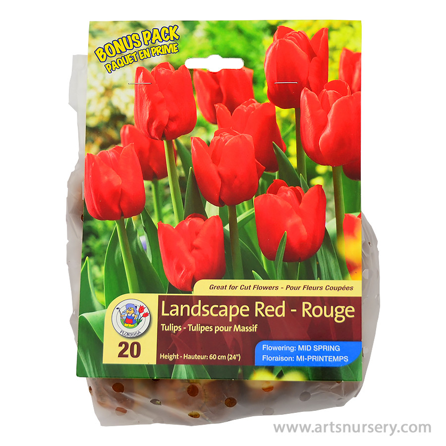 Tulipa 'Landscape Red' Bulbs