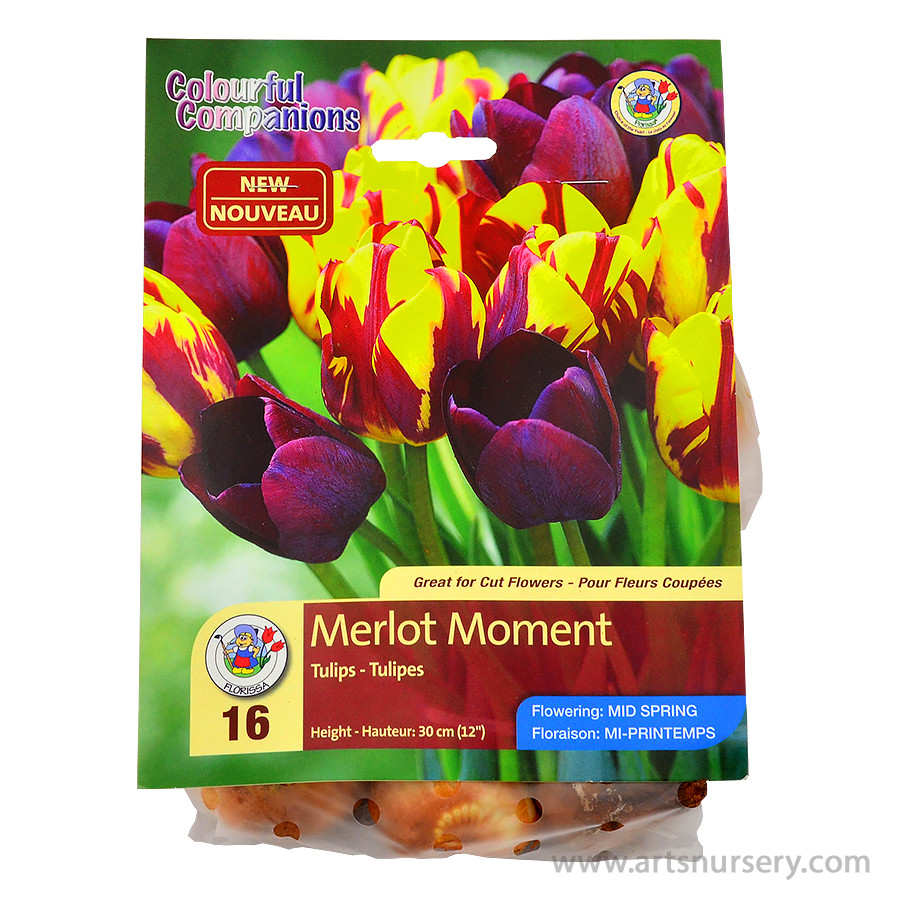 Merlot Moment Colourful Companion Bulb Collection