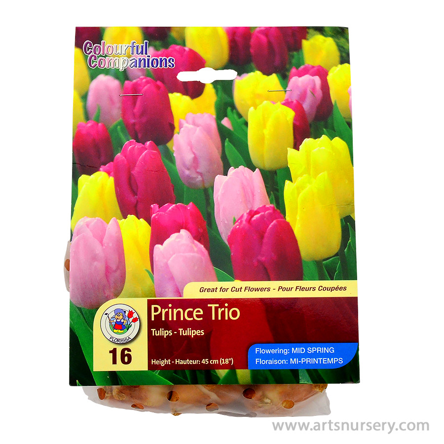 Colourful Companions 'Prince Trio' Bulb Collection