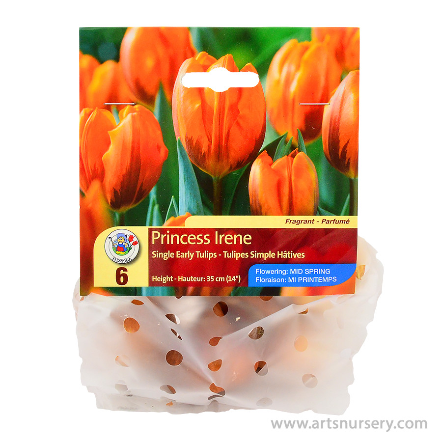 Princess Irene Single Early Tulip Bulbs