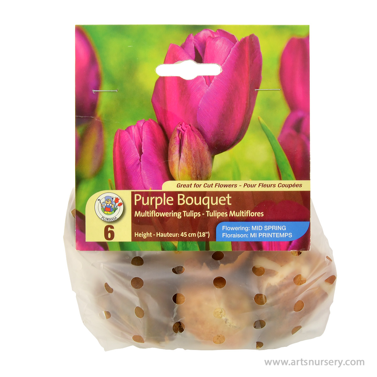 Tulipa 'Purple Bouquet' Bulbs