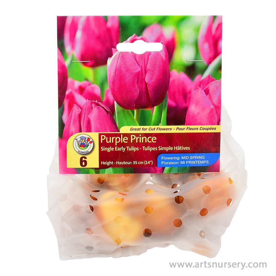 Tulipa 'Purple Prince' Bulbs
