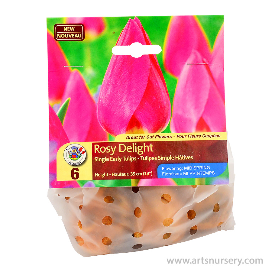Tulipa 'Rosy Delight' Bulbs