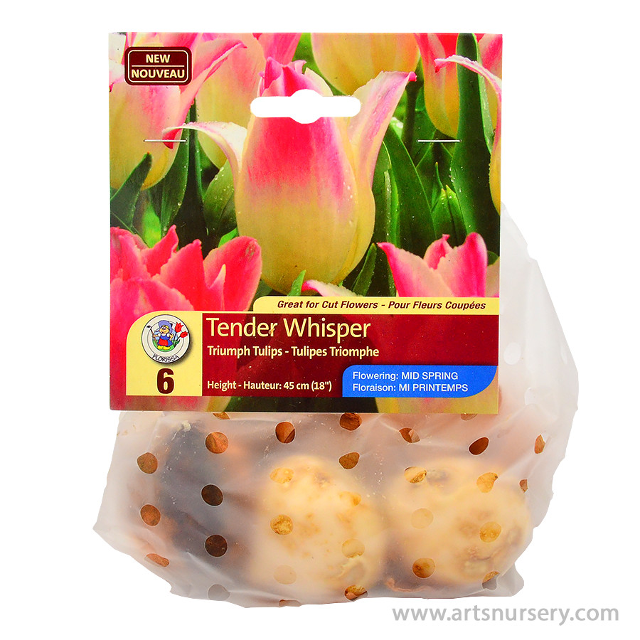 Tulipa 'Tender Whisper' Bulbs