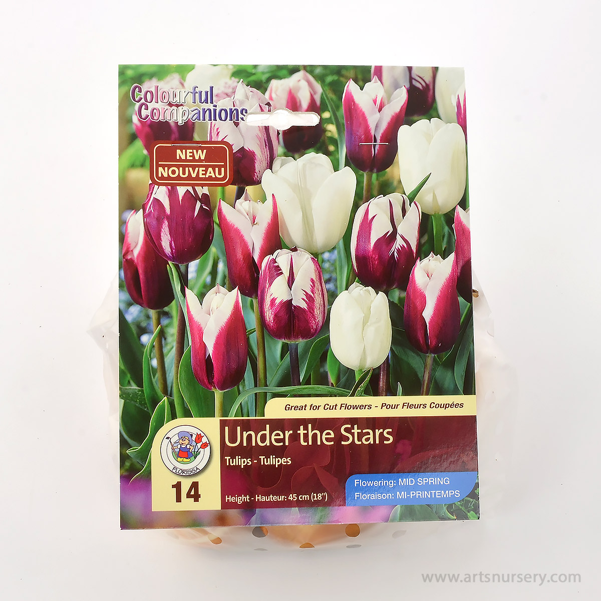 Colourful Companions Tulipa 'Under the Stars' Bulbs
