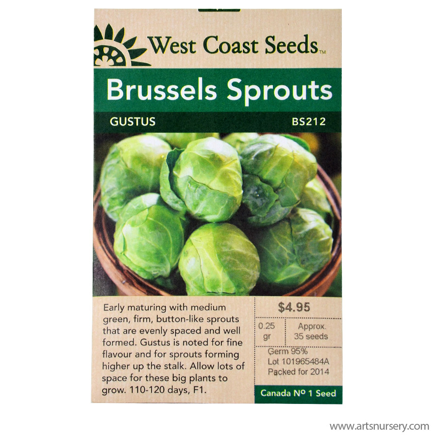 Gustus Brussel Sprout Seeds