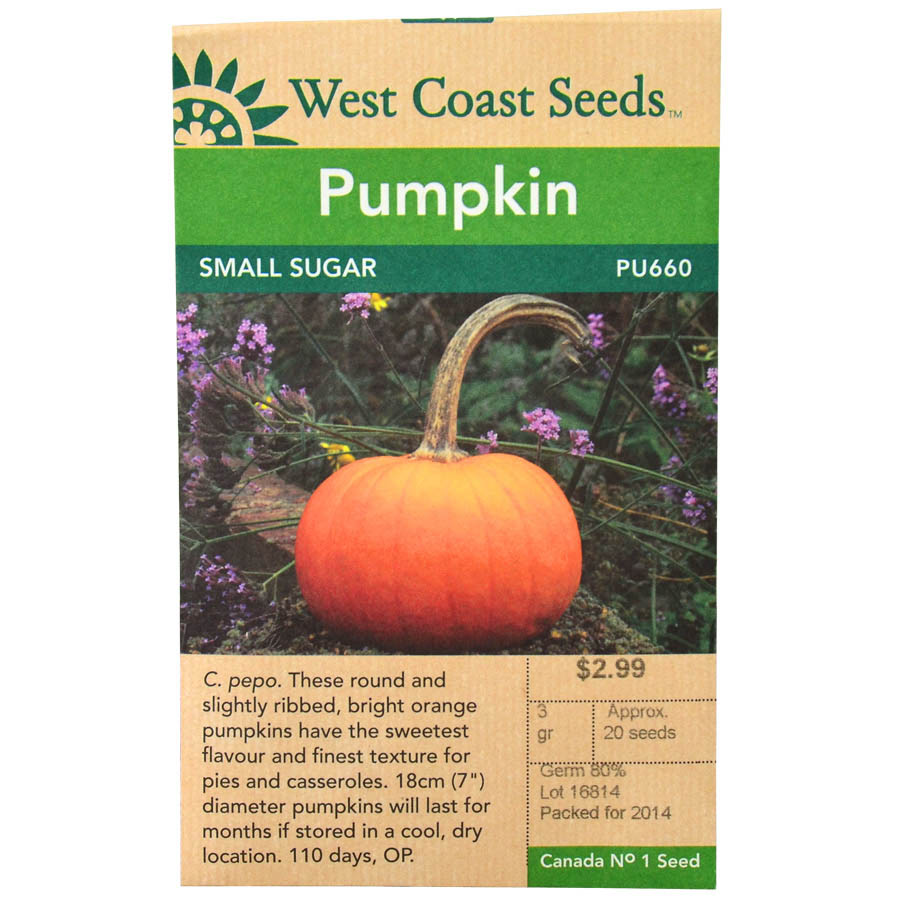 Pumpkin Small Sugar Seeds | West Coast Seeds