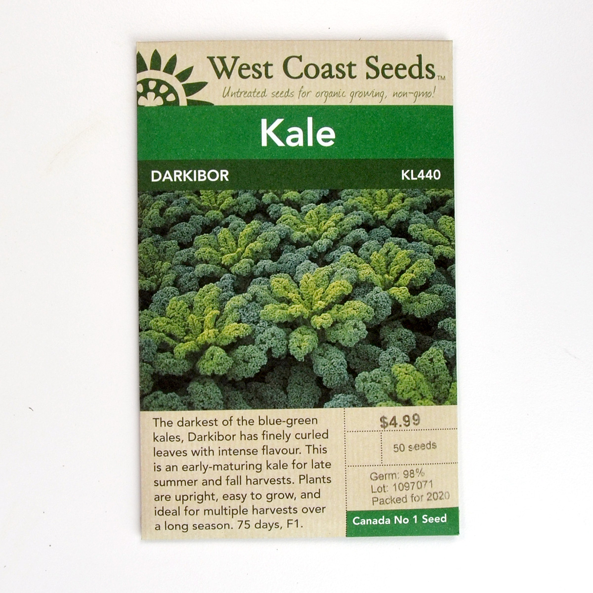 Kale Darkibor Seeds KL440