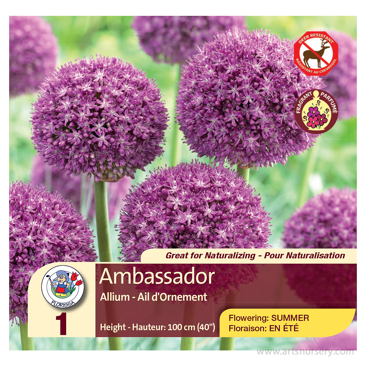 Allium 'Ambassador' Bulbs