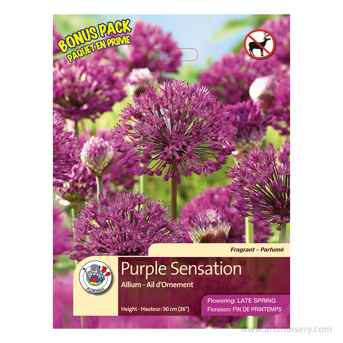 Allium 'Purple Sensation' Bulbs