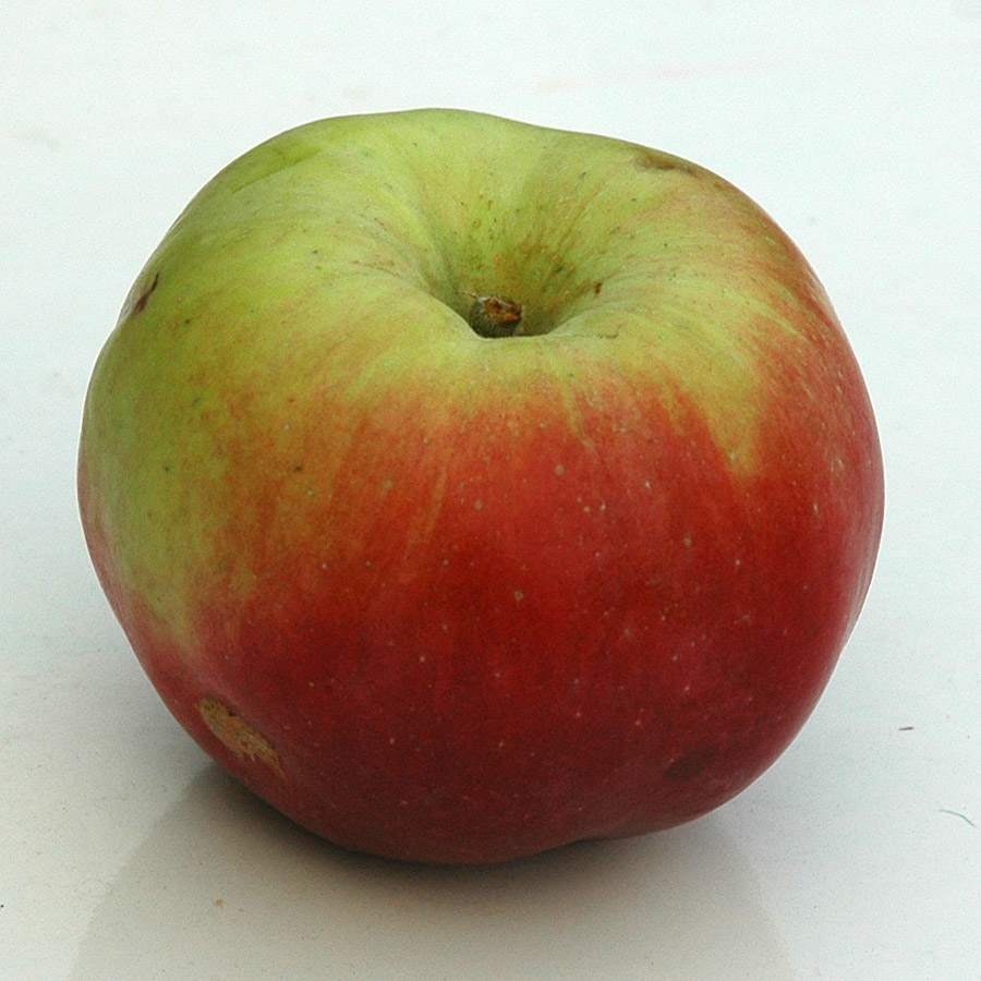 Apple 'Northen Spy'