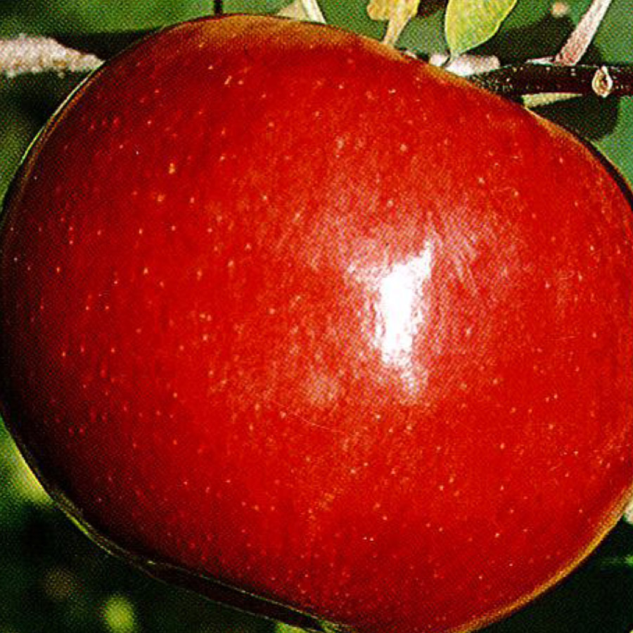 Apple 'Red MacIntosh'