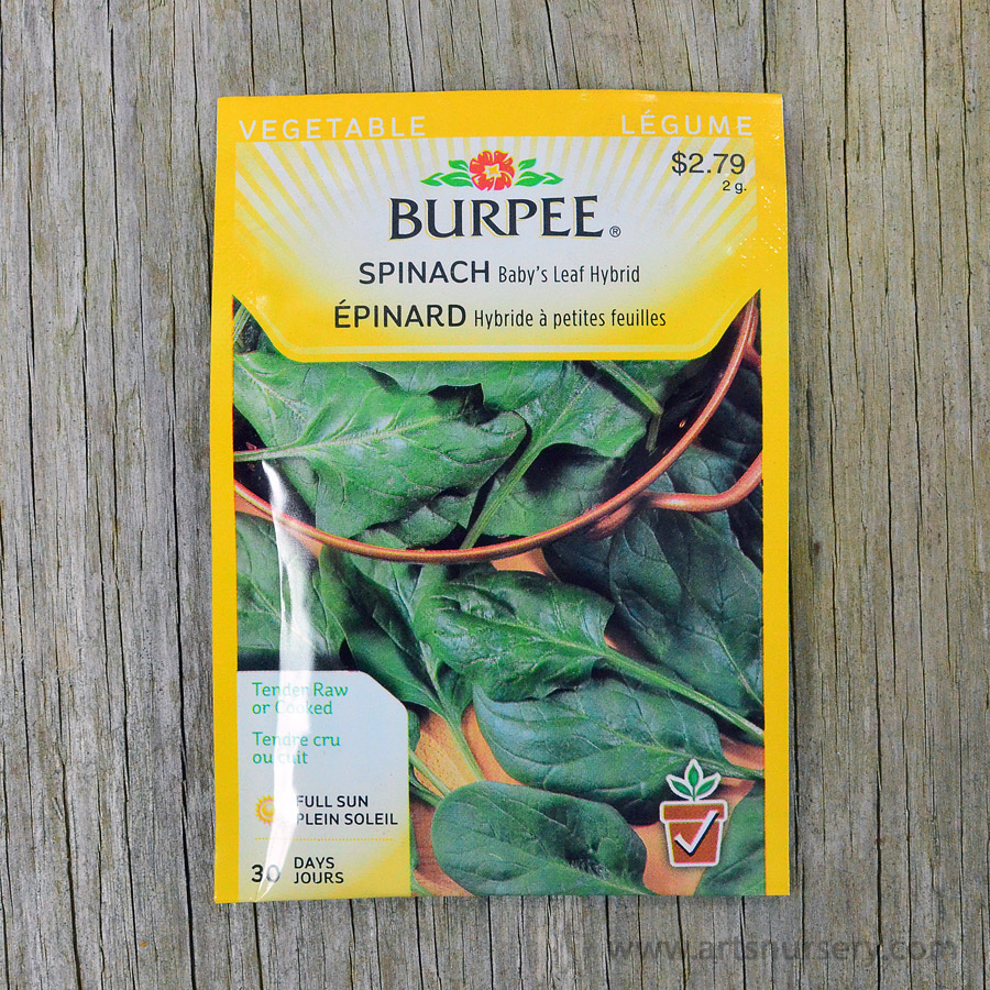 Baby Leafs Hybrid Spinach Seeds Burpee