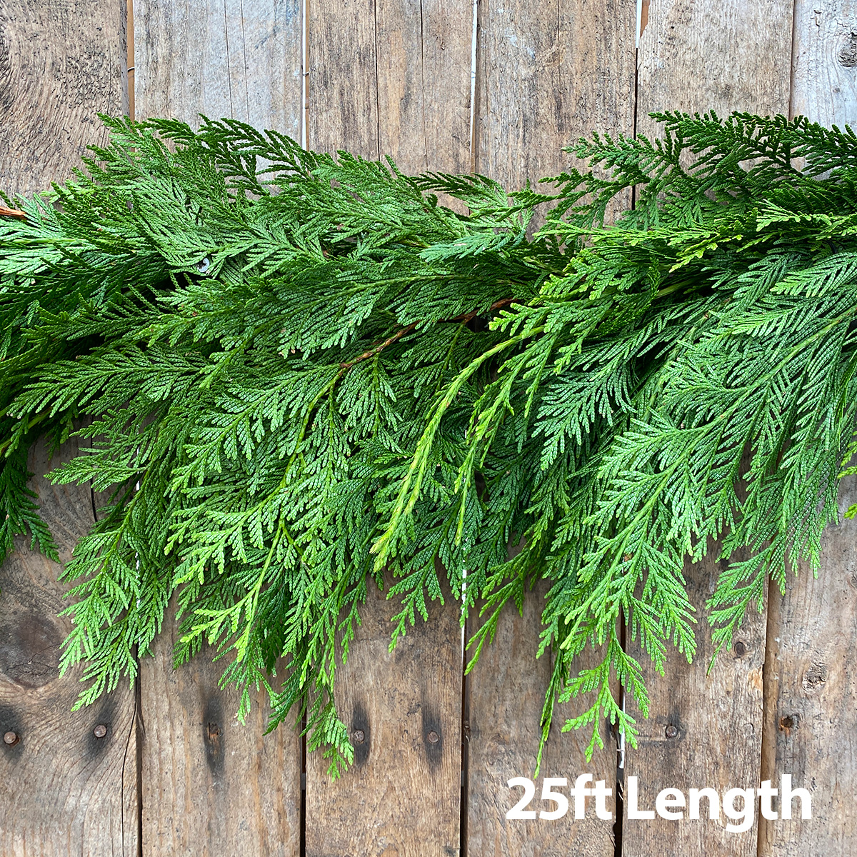 Christmas Greens - Cedar Garland 25ft