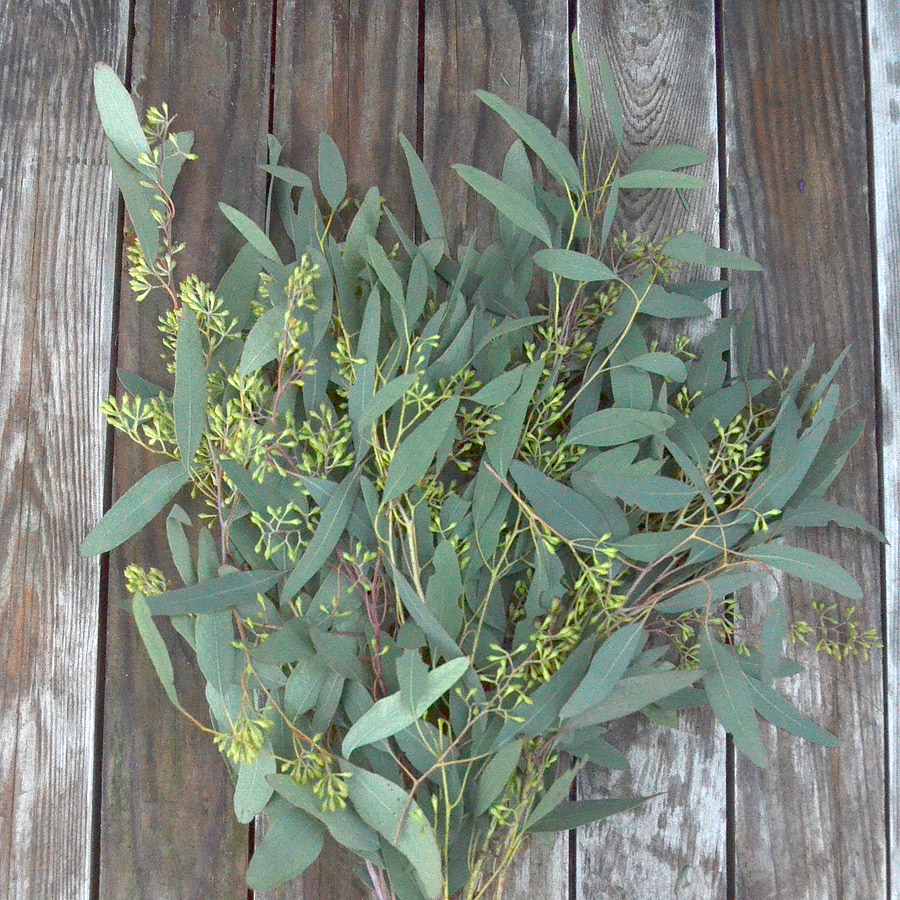 Green Eucalyptus Stems