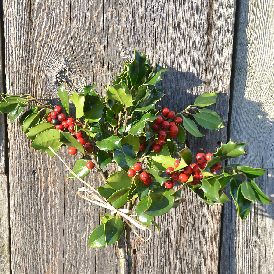 Evergreen Holly Boughs