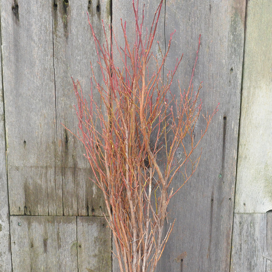 Huckleberry Stems Stems