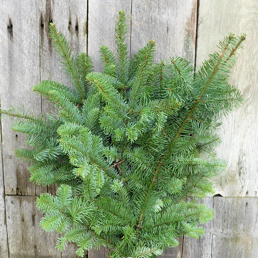 Noble Fir Boughs and Branches