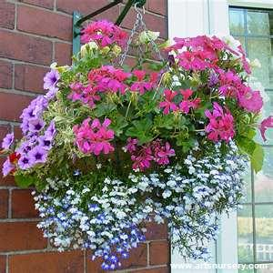 Hanging Basket Mixed
