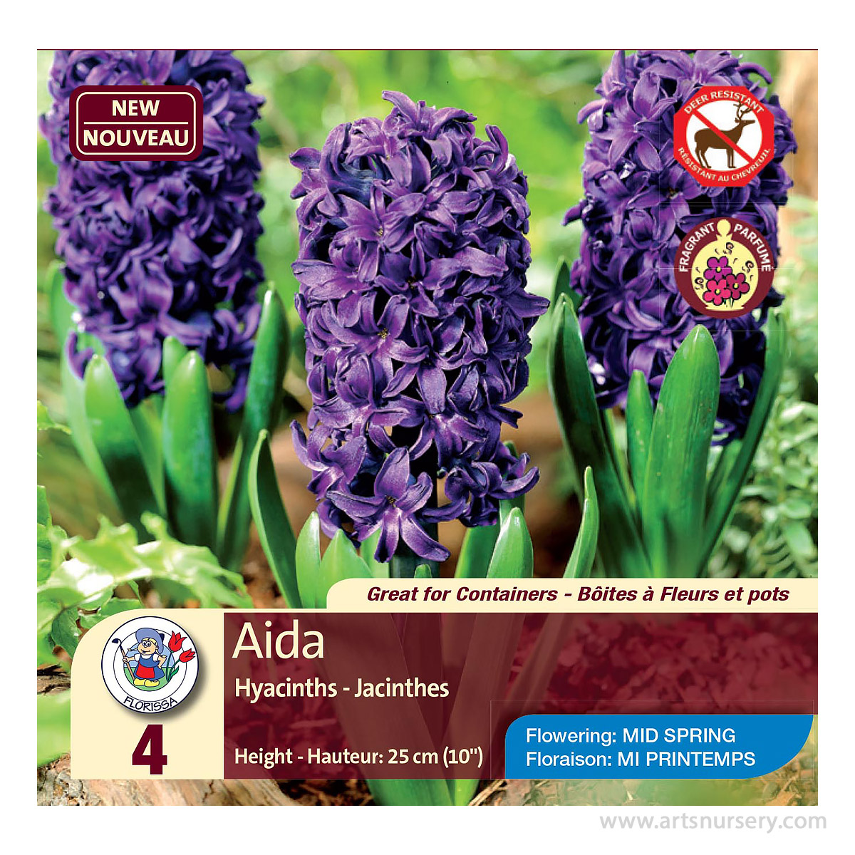 Hyacinth 'Aida' Bulbs