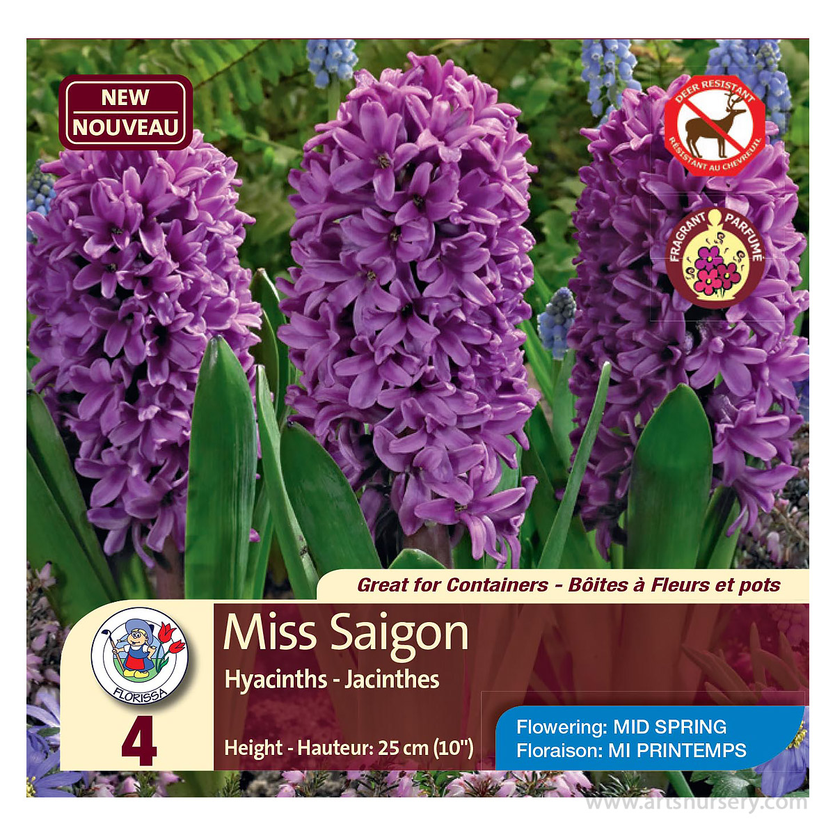Hyacinth 'Miss Saigon' Bulbs