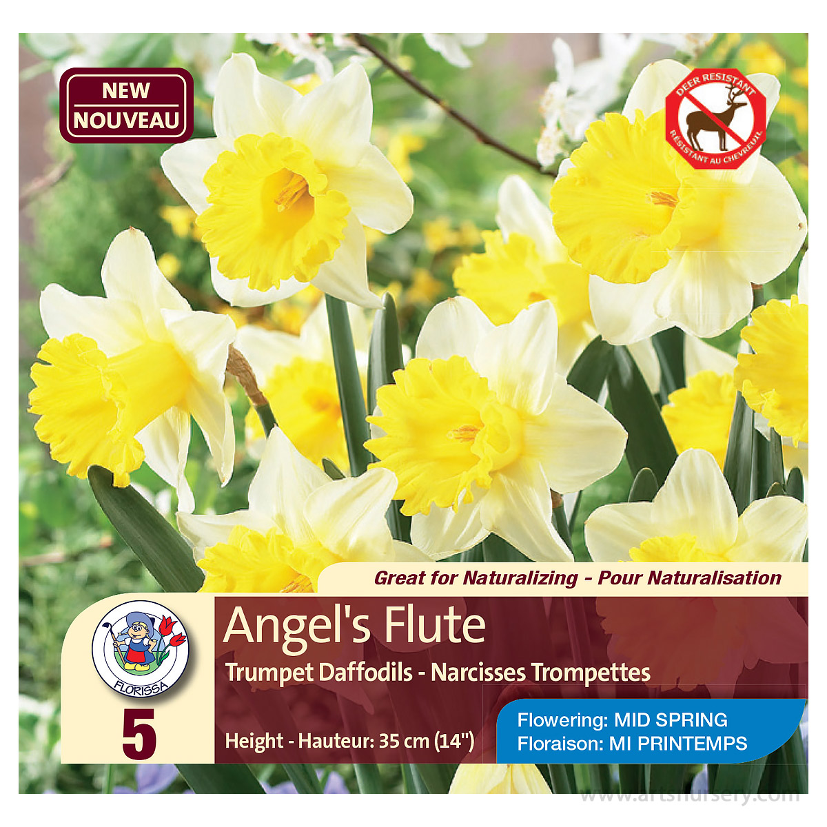 Narcissus 'Angels Flute' Bulbs
