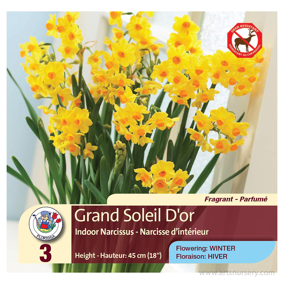 Narcissus 'Grand Soleil D'or' Bulbs