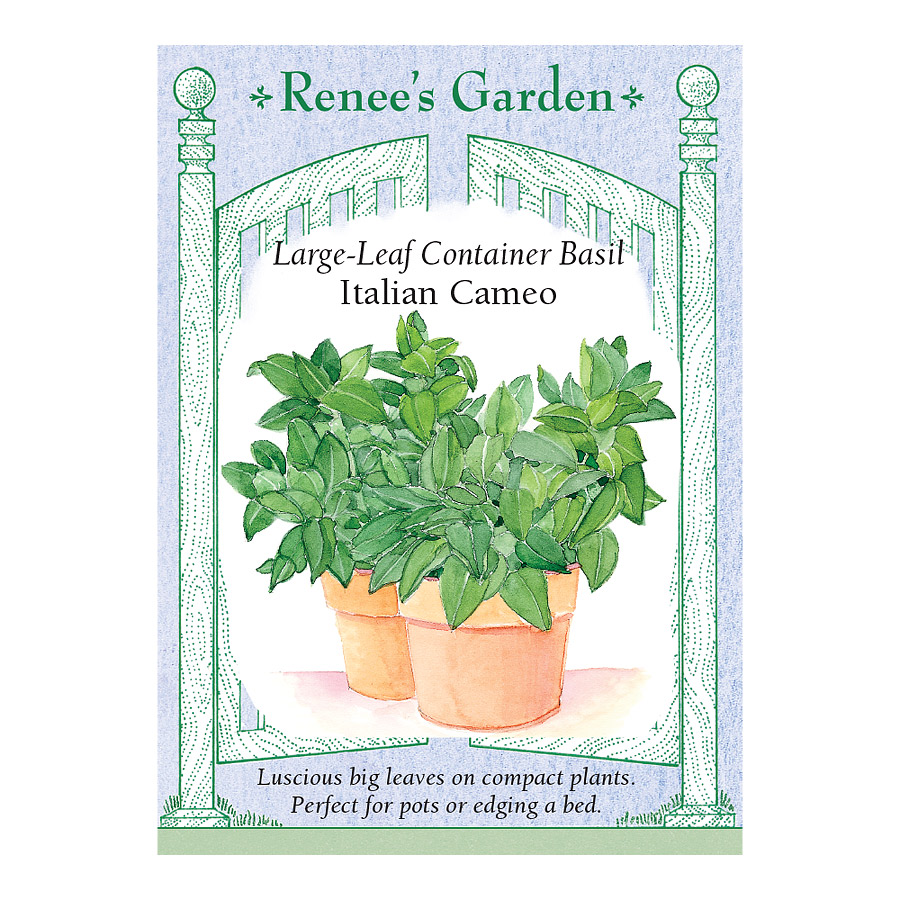 Cameo Container Basil Seeds