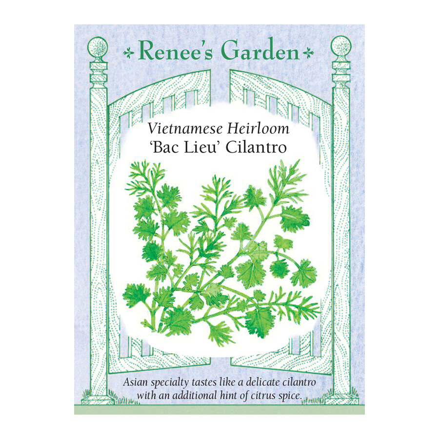 Bac Lieu Heirloom Vietnamese Cilantro Seeds